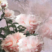 Floral design peonies — Stock Photo