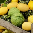 Varied Squashes — Stock Photo