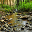 Stock Photo: Creek in a Forest