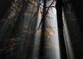 Floresta profunda — Fotografia Stock