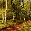 Stock Photo: Forest lane