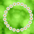 Stock Photo: Flower circle