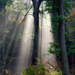 Sunbeam — Stockfoto