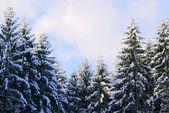 Snowy lasu — Zdjęcie stockowe