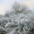 Stock Photo: Frosted landcsape
