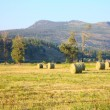 Round Bales — Stock Photo #37620281