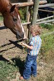 Pojke och häst — Stockfoto