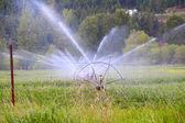 Irrigation — Stock Photo