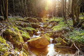 The river in the forest in the afternoon sun - HDR — Stock Photo