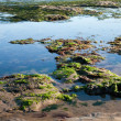 The sea shore by the low tide — Stock Photo #26542975