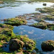 The sea shore by the low tide — Stock Photo
