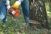 Lumberjack cuts down the tree by the chainsaw — Stock Photo