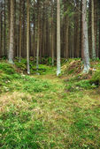 The primeval forest-HDR — Stock Photo