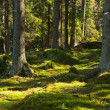 Stock Photo: The primeval forest