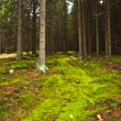 The primeval forest — Stock Photo #34696347
