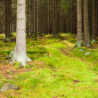 The primeval forest — Stock Photo #34696355