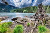 Glacial Black Lake surrounded by the forest — Stock Photo