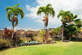 Aloha sign with palm trees on Big Island Hawaii — Stockfoto