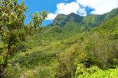 Iao Valley State Park on Maui Hawaii — Stockfoto