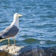 Gull on the shore of the Sea of ​​Marmara in Istanbul — Stok fotoğraf