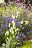 Bushy plants on the background of flowering garden — Stock Photo