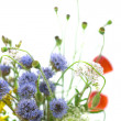 Bouquet of wild flowers on a white background — Stock Photo