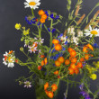 Wild flowers on a black background — Stock Photo