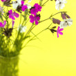 Wild flowers on a yellow background — Stock Photo