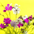 Wild flowers on a yellow background — Stock Photo #13689775