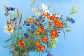 Wild flowers on a blue background — Stock Photo