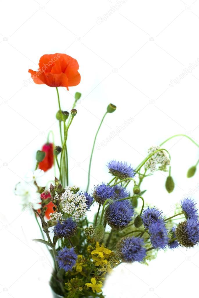 Букет полевых цветов на белом фоне
