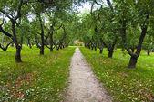 Autumn apple-tree in Kolomenskoye park in Moscow — Stock Photo
