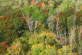 Many autumn trees from high in Moscow — Stock Photo