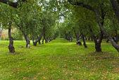 Manzano otoño en parque kolomenskoye en moscú — Foto de Stock