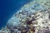 Reef — Stock Photo