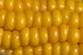 Kukuřice 2012 003 — Stock fotografie