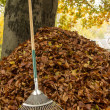 Stock Photo: Autumn Leaves 2012 03