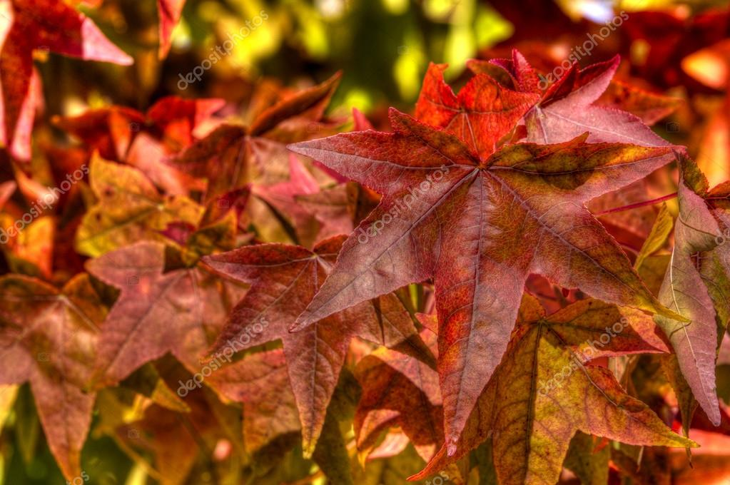 Leaves in autumn — Stock Photo #14046604