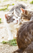 Two cats sniff each other — Stock Photo