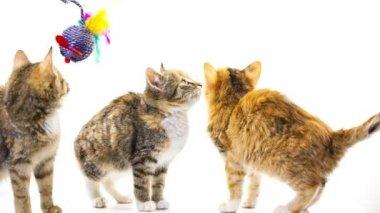 Kittens — Stock Video
