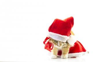 圣诞圣诞老人猫 — 图库视频影像