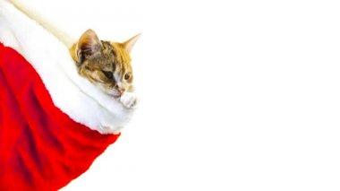 Gato navidad santa — Vídeo de stock