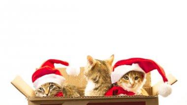 Vánoční santa kočka — Stock video
