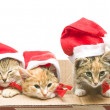 Christmas Santa Cat — Stock Photo