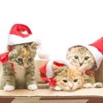 Christmas Santa Cat — Stock Photo