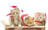 Gato navidad santa — Foto de Stock