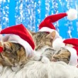 Christmas Santa Cat — Stock Video