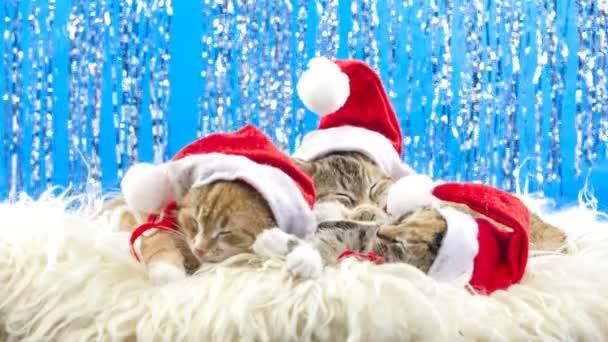 Рождество кот видео