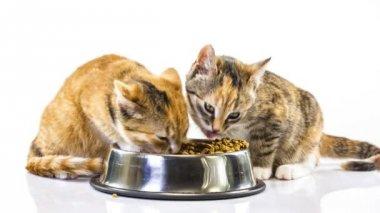 小猫吃 — 图库视频影像