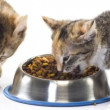 Stock Video: Feeding kittens